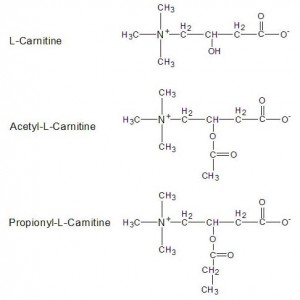 The Carnitine Family