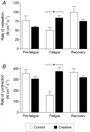 Creatine reduces fatigue, amongst other great benefits